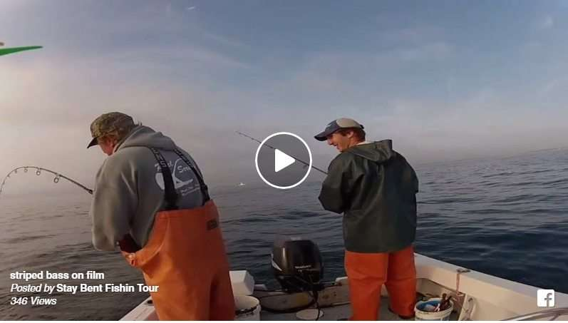 Jigging Stripers At My Office [VIDEO] 2