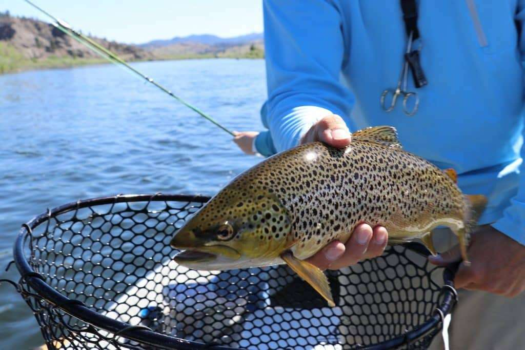 VT Fishing Guide - Trout Fishing in Vermont